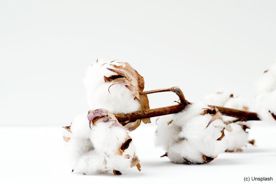 cotton-marianne-krohn-unsplash-1280